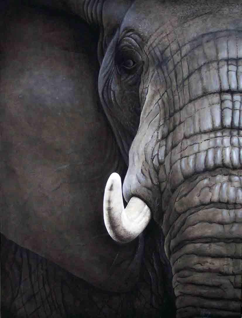 elefanten bilder auf leinwand